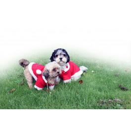 QHP hondendeken kerst