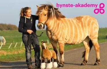 Hoe moet je je paard scheren